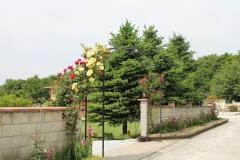 Алеята към двора